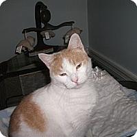 Adopt A Pet :: Nemo - Jenkintown, PA