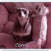 Adopt A Pet :: Corrie - Hartsville, TN