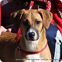 Adopt A Pet :: MISTY - Mahopac, NY