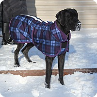 Adopt A Pet :: Molly - Phoenixville, PA