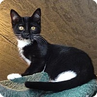 Adopt A Pet :: Masha - Lathrop, CA