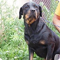 Adopt A Pet :: Beauty - Frederick, PA