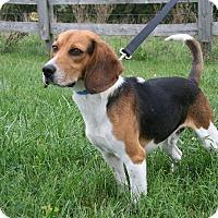 Adopt A Pet :: Sampson Grant - Waldorf, MD