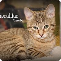 Adopt A Pet :: Esmeraldar - Springfield, PA