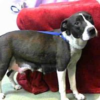 Adopt A Pet :: URGENT NOW @ DEVORE - San Bernardino, CA