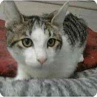 Adopt A Pet :: Harry - Oakland Park, FL