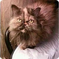 Adopt A Pet :: Joy - Columbus, OH