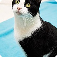 Adopt A Pet :: Chilly Willy - Chicago, IL