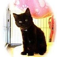 Adopt A Pet :: Tomasina - Shelton, WA