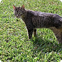 Adopt A Pet :: Shelly - Naples, FL