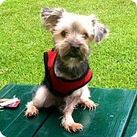Adopt A Pet :: Spencer - Gulfport, FL
