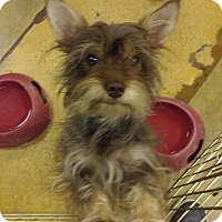 Adopt A Pet :: Lola - Miami, FL