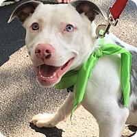 Adopt A Pet :: Roberta - Alpharetta, GA