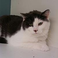 Adopt A Pet :: Pickle - Medina, OH