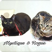 Adopt A Pet :: Mystique and Rogue - Livonia, MI