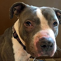 Adopt A Pet :: KIRBY - Lucasville, OH