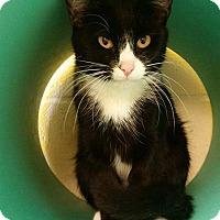 Adopt A Pet :: Mabel - Pittsburg, KS