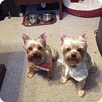 Adopt A Pet :: Misti - Jacksonville, FL