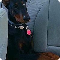 Adopt A Pet :: Gus - Lafayette, IN