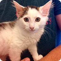 Adopt A Pet :: Dusty - Marina del Rey, CA