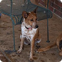 Adopt A Pet :: Lady - Conway, AR