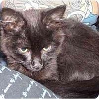 Adopt A Pet :: Happy - Davis, CA
