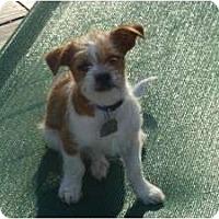 Adopt A Pet :: Jiminy - Raleigh, NC