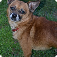 Adopt A Pet :: Gizmo~Adopted! - Troy, OH