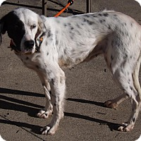 Adopt A Pet :: Adele- WISCONSIN - Wood Dale, IL