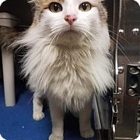 Adopt A Pet :: SHAMPOO - Bryan, TX