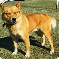 Adopt A Pet :: Rocco - Columbus, NE