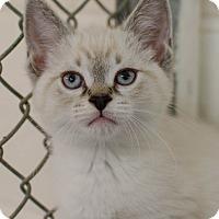 Adopt A Pet :: Mocha - Greenwood, SC