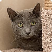 Adopt A Pet :: Conan - Wilmington, DE
