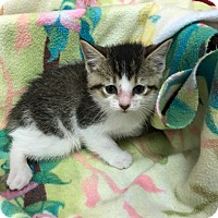 Adopt A Pet :: Juicyfruit - Decatur, AL