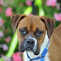 Adopt A Pet :: LaMonte - Alameda, CA
