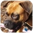 Photo 1 - Boxer Dog for adoption in Sunderland, Massachusetts - Phoenix
