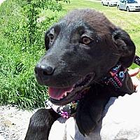 Adopt A Pet :: SAGE - Glastonbury, CT