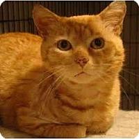 Adopt A Pet :: Cooper - Muncie, IN