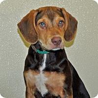 Adopt A Pet :: Chad - Port Washington, NY