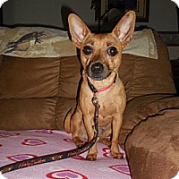 Adopt A Pet :: Ginger - Shawnee Mission, KS