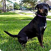 Adopt A Pet :: Rosie 4 - Houston, TX
