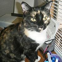 Adopt A Pet :: Paloma - Manning, SC