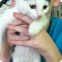Adopt A Pet :: Nicki - Riverhead, NY