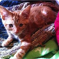 Adopt A Pet :: Animal - St. Louis, MO
