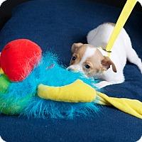 Adopt A Pet :: Wendy - Nuevo, CA