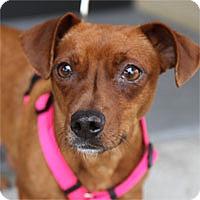 Adopt A Pet :: Winnie - Pacific Grove, CA