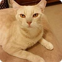 Adopt A Pet :: MILLIE - Ridgewood, NY