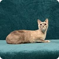 Adopt A Pet :: Aurora - Cary, NC