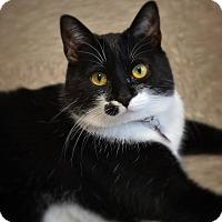 Adopt A Pet :: Beazy - Byron Center, MI