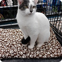 Adopt A Pet :: Winfred  (loves to talk) - Sterling Hgts, MI